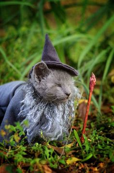 Gandalf, Lord Of The Rings . | Tiny Kittens Dressed As Iconic Fantasy Characters Are The Best Tiny Kittens