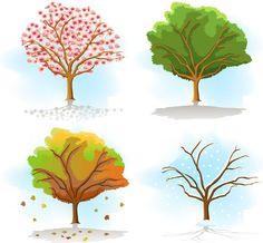 Four Seasons Tree Drawing Same tree in different seasons Lany, Four Seasons Image, Trees To Plant, Plant Leaves, Seasons Months, Waterfall Cards, Tree Clipart, Different Seasons, Color Vector