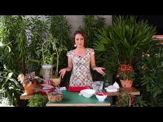 Receita caseira: como acabar com as pragas nas plantas - YouTube