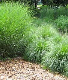 All about xeriscaping