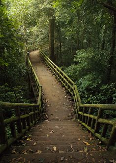 Path to the cave of the Prehistoric Man in Cuc Phuong National Park.