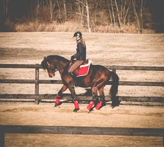 Arabian stallion - Shivaji JJ (Ajman Moniscione x Sasha Jullyen V / Jullyen El Jamaal). Training in dressage.  Varian bloodlines in Europe.