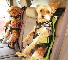 This car seat is set to redefine the definition of pet safety. We are currently calling this The Rocketeer Pack. The concept passed both crash simulation tests with flying colors. Animals And Pets, Baby Animals, Cute Animals, Animals Crossing, Pekinese, Dog Car Seats, Puppy Car Seat, Military Dogs, Hamster