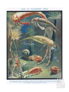 Life in Paleozoic Seas, Illustration from 'The Science of Life' Giclee Print by Leonard Robert Brightwell at Art.com