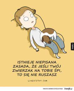 Zabawne komiksy o zwierzętach