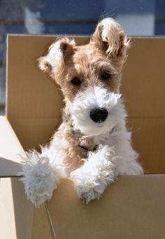 Cheeky fox in the box.❤️