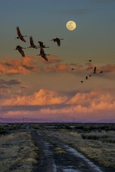 Flying by moonlight... Sandhill cranes flying by the moon over a road by David Soldano on 500 px.