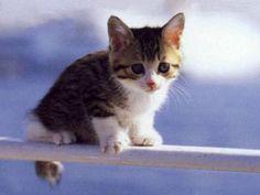 Pur essendo pacifici i #gatti possono mordere la #disinfezione è obbligo