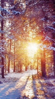 Winter Forest Dawn Landscape #iPhone #5s #wallpaper
