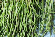 Samphire is not very common used type of herb. It has many health benefits such as boosts circulation, induces sleep, helps with weight loss. Sea Asparagus, The Fish Market, Types Of Herbs, Plant Health, British Countryside, Slow Travel, Fruit And Veg, Stir Fry, Health Benefits