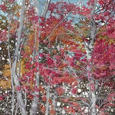 Natalia Margulis (works in the U.S.A. with textiles)