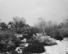 Robert Adams | The Place We Live | Yale University Art Gallery - Santa Ana Wash…