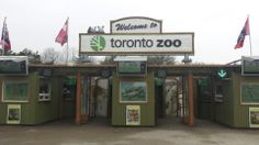 Toronto Zoo- hands down one of the best zoos I've ever been too!! Great exhibits, clean, animals look happy, and a large variety of animals.