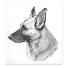 German Shepherd Dog Drawing-Pet Portraits Drawing Custom Graphite... ❤ liked on Polyvore featuring fillers