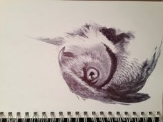 Ballpoint pen drawing of a Great horned owl. I love drawing with pen.