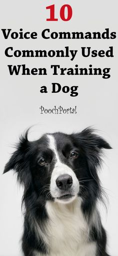 Discover the 10 most commonly used voice commands used when training a dog.