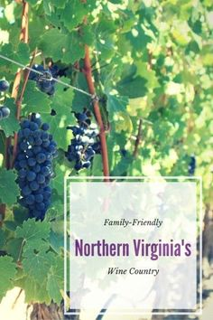 Family-Friendly Northern Virginia's Wine Country. trekaroo.com