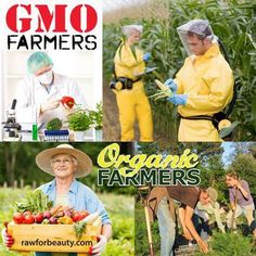 Chemtrails Killing Organic Crops, Monsanto's GMO Seeds Thrive--> http://www.undergroundhealth.com/chemtrails-kill-crops/