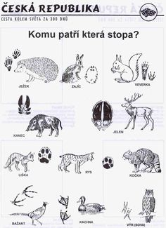 zvířátka Montessori, Emotions Preschool, Coloring Books, Coloring Pages, Animal Tracks, Animal Sketches, Elementary Science, Forest Animals, Science And Nature