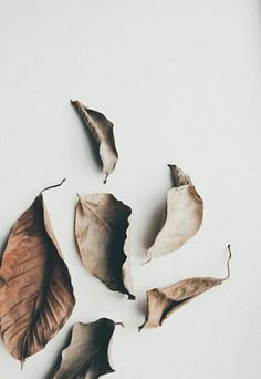 Awesome News Fall Aesthetic Wallpaper : Autumn love with Bouroullec and Verstuyft Photowall Ideas, Minimal Photography, Leaf Photography, Photography Blogs, Spring Photography, Iphone Photography, Nature Photography Flowers, Aesthetic Photography Nature, Urban Photography