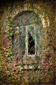 """Enjoy these 32 """"Creepy Abandoned Windows and Doors"""". It's no wonder we find these broken windows and doors creepy yet compelling. Old Windows, Windows And Doors, Abandoned Buildings, Abandoned Places, Magic Places, Broken Window, Through The Window, Old Doors, Architecture"""