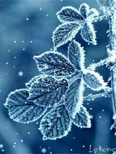 Frozen beauty. Snowing GIF, falling snow GIF, winter GIF. Send beautiful GIF message to loved ones. Tap to see more beautiful animated GIF as Greeting cards & messages for Facebook Messenger and Emails. @mobile9 #gif