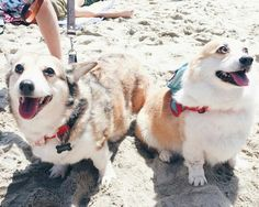 600 Corgis Took Over A Beach. Here Are Our Favorites.