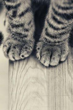 Awwww look it's so cute...please pin it !!!