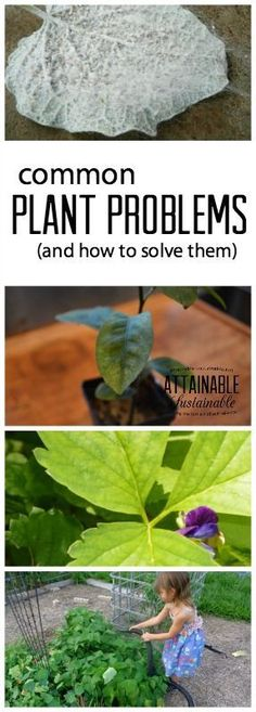 Notice that your little seedlings are struggling? Concerned about some of the plants in your vegetable garden? The culprit may be one of these common plant problems. Here's what to look for and how to treat it naturally.