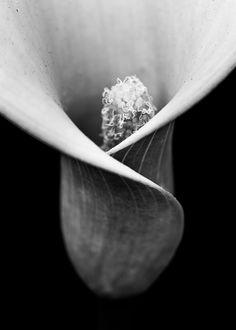 Lily B/W by Shuji Horikiri on 500px