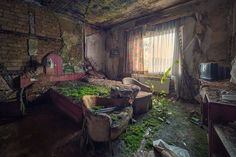The TV in this room seems out of place with how fast nature reclaimed this space. #abandon