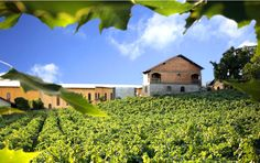 Blog OMG - I'm Engaged - Destino de lua de mel para amantes de vinho - Bento Gonçalves, no Brasil. Honeymoon.