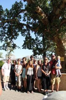 Zacheus's tree , sycamore,in Jericho!!! 2000years old, oldest tree in the oldest city!!!