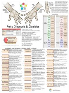 Fundamentals of traditional chinese medicine pdf herbs natural pulse diagnosis acupuncture poster 18 x 24 fandeluxe Image collections