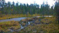 Inari, Lapland 02092016
