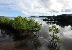 Philippines to plant more mangroves in wake of Typhoon Haiyan - Yahoo News Philippines