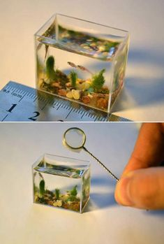 World's Smallest Fish Tank  I'm not sure if these are real fish... I think this may be resin artwork.