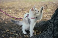 Learn how to teach your cat to come when called by using clicker training and positive reinforcement.