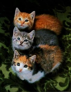 Three Adorable Kittens.