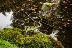 Peacefull pond