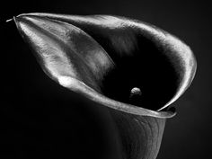 Black And White Art | Lily Flower Black And White Photograph Photograph by Artecco Fine Art ...