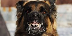 """Former Navy SEAL Clint Emerson, author of """"100 Deadly Skills,"""" explains what to do if you're ever attacked by a dog."""