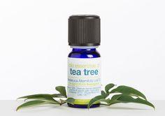 Aceite esencial de #TeaTree (Árbol de té).  Nota aromática: fresca, balsámica, alcanforada. Método de extracción: destilación por corriente de vapor. Perfil aromacológico (acción sobre el humor y estado de ánimo): tónico, revitalizante. Eficaz en casos de cansancio, estrés, depresión y pensamientos oscuros. Uso en la cosmética (acción sobre la piel, apropiadamente diluido): pieles secas, impuras. #Desinfectante y #antibacteriano, calma las picaduras de #mosquitos. | LaSaponaria.es