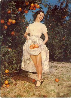 Vintage Florida Postcard - Florida Beauties Cheesecake in Orange Grove JUMBO POSTCARD