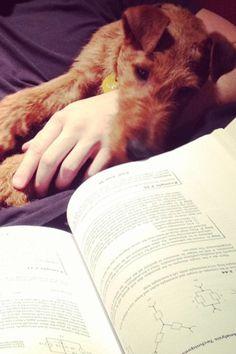 Cute IT pup look how smart!!