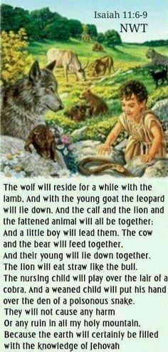 The wolf will reside for a while with the lamb, and with the young goat the leopard will lie down, and the calf and the lion and the fattened animal will all be together: and a little boy will lead them. - Isaiah 11:6 - 9.