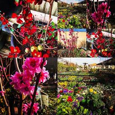 "【sassykassyfloral】さんのInstagramをピンしています。 《San Gabriel Nursery ""must see"" 80 years old nursery providing plants, pots, cactus, cherry blossom, Chinese vegetables, garden supplies, bonsai and florist on the grounds.》"