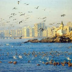 Birds on the Pacific Ocean at the city of Viña del Mar, Chile.