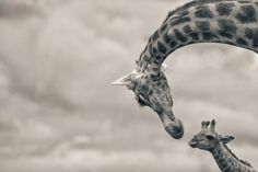 17-best-wildlife-photography.jpg