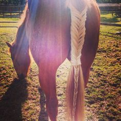 Fishtail braid in my horse's tail that I did!